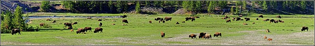 Wild West - Panorama - Yellowstone NP, WY [explored]