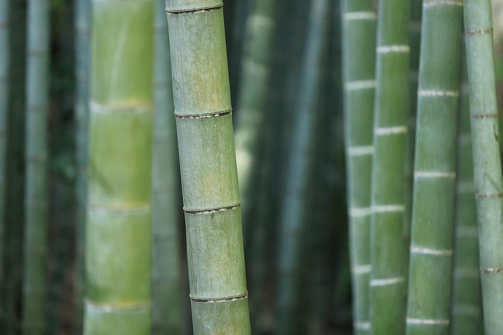 種竹好處多、每種竹材特性不盡相同。(圖片來源/Pixabay)