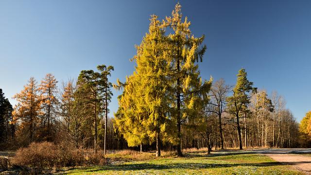 Autumn afternoon in Upper Park.