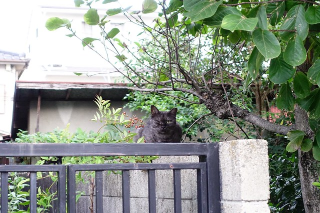 Today's Cat@2019-10-08