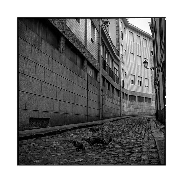 pidgeons • porto, portugal • 2019
