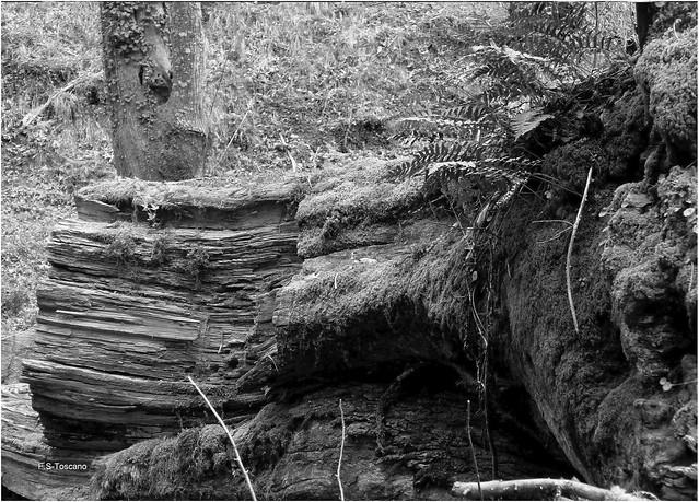 Madeira vella 10. Old wood 10.
