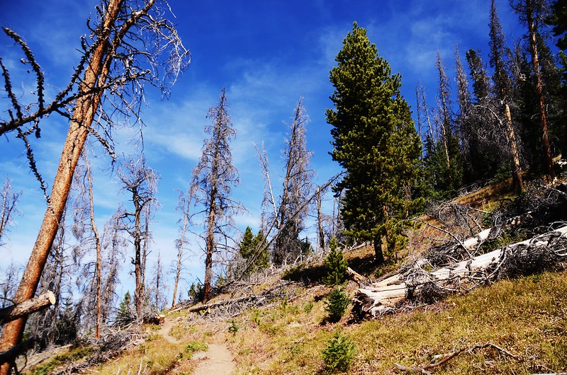 Fall foliage hike at Ptarmigan Peak Trail, Colorado (67)