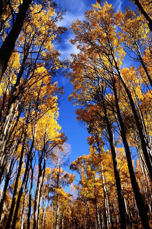 Fall foliage hike at Ptarmigan Peak Trail, Colorado (35)