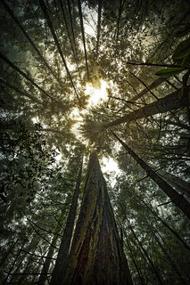 Julia's Trees