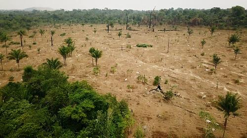 La ganadería devora el Amazonas