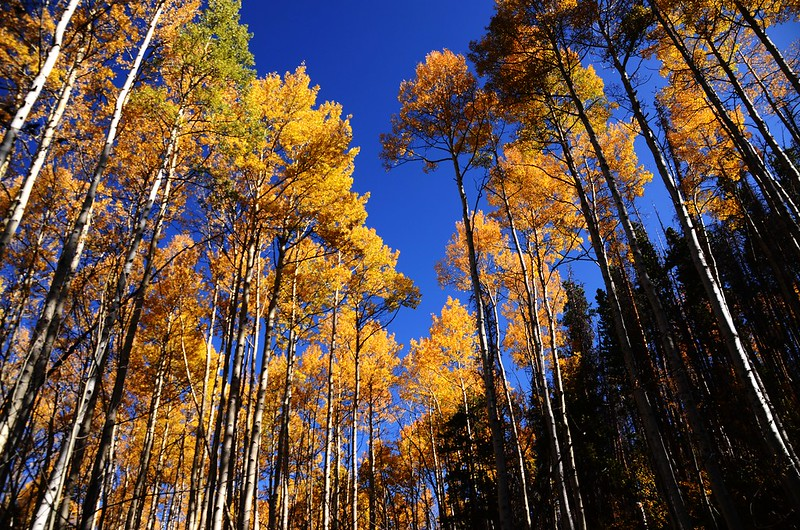 Fall foliage hike at Ptarmigan Peak Trail, Colorado (48)