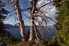 Crater Lake's Trees at the Rim