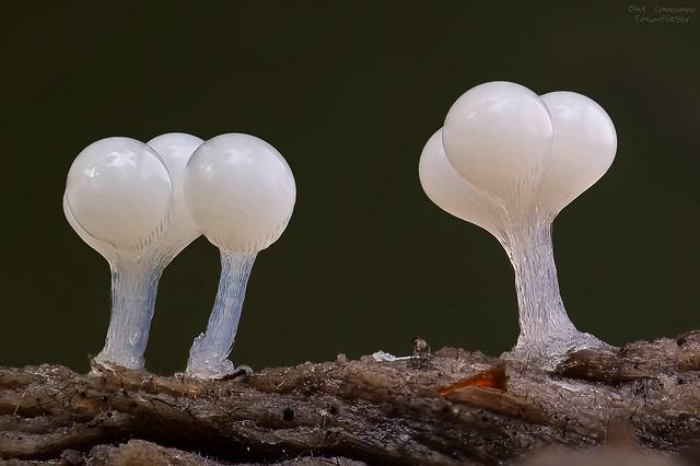 alien slime balls