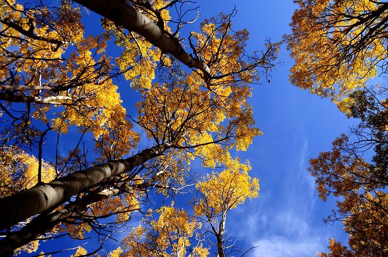 Fall foliage hike at Ptarmigan Peak Trail, Colorado (37)
