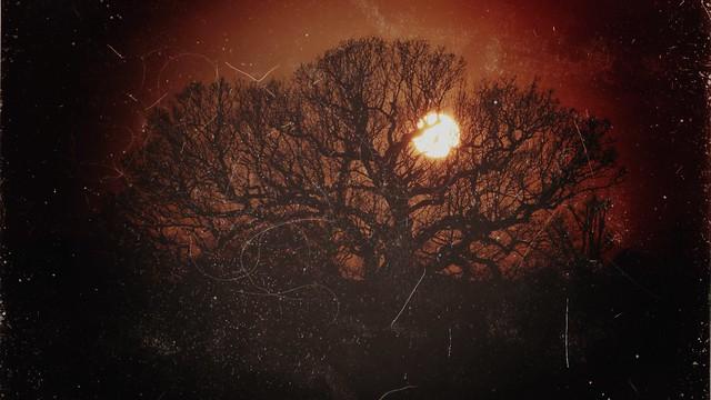 Danson Park Oak Tree Sunset