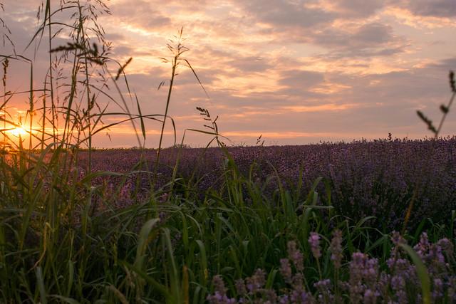 Magic Purple Nature