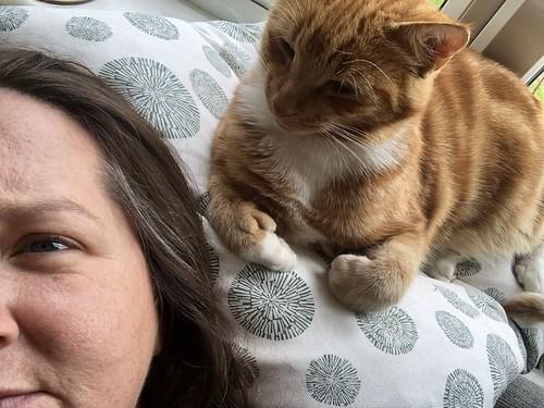 Puss cat