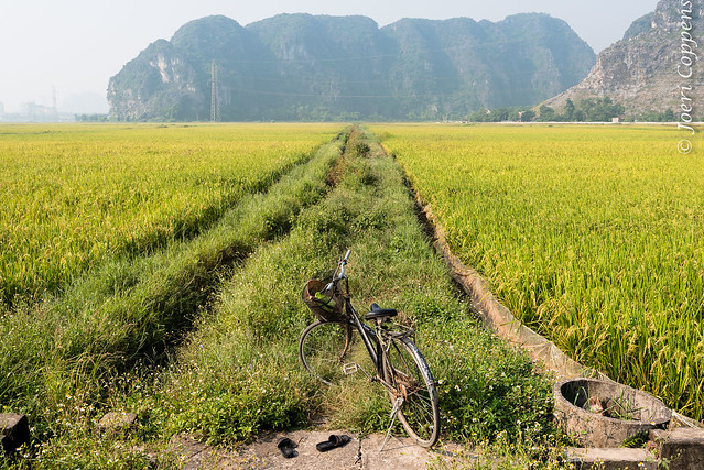 Bike, Slippers and a Rice Field