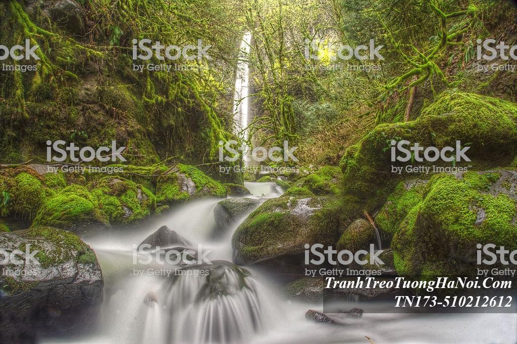 Nuoc khe suoi chay trang xoa giua rung amia TN173-510212612