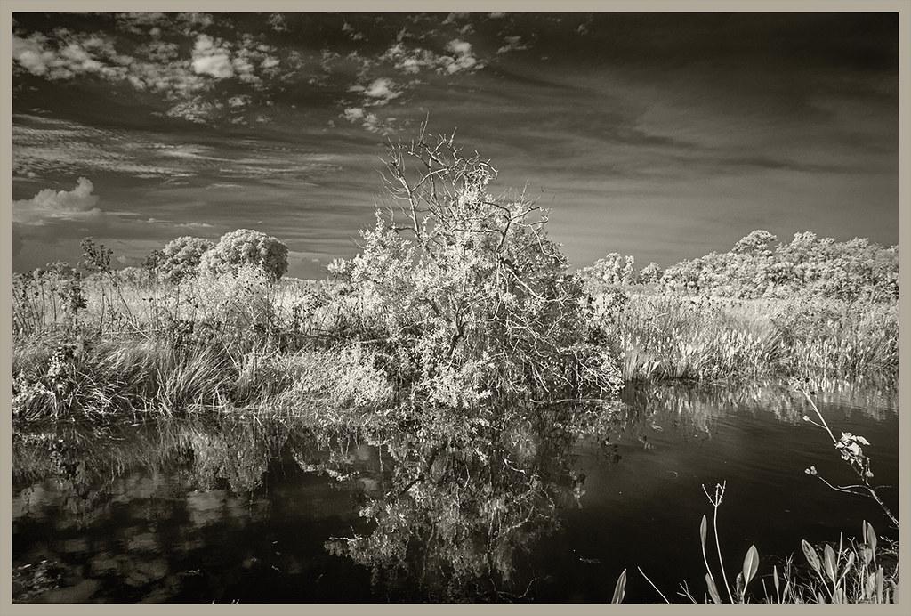 Lake Woodruff NWR #12 2019; Canal Reflections