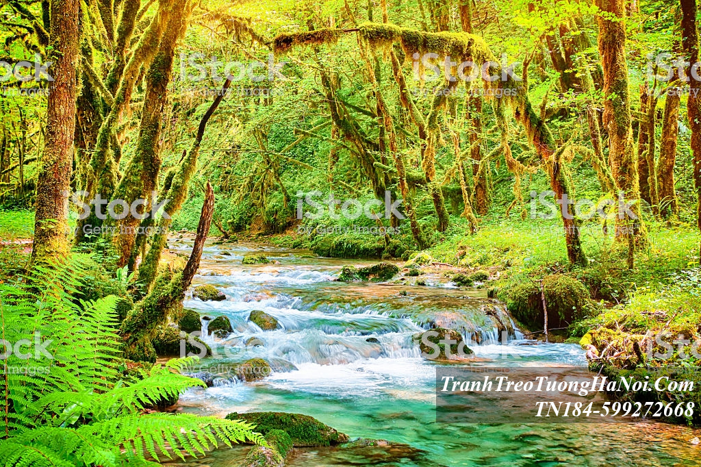 Tranh thac nuoc khe suoi trong xanh mua thu TN184-599272668