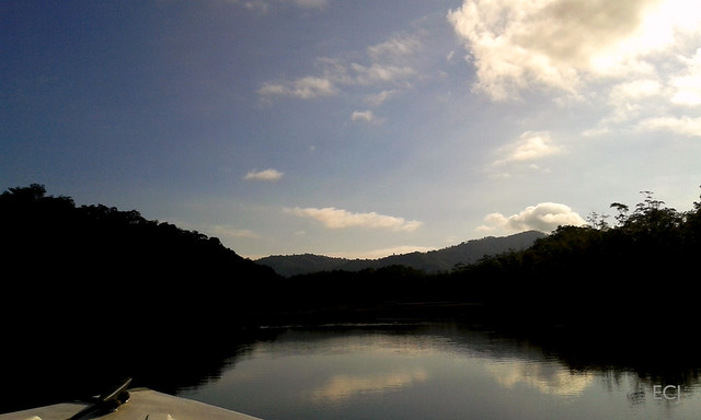 Paisaje del humedal nacional Térraba-Sierpe, temprano en la mañana/ Landscape of the Térraba-Sierpe national wetland, early in the morning