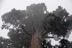 Shrouded in Fog