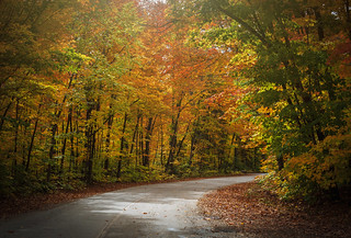 A road in  Algonquin Park.