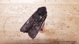 Black Rustic  IR P1540993
