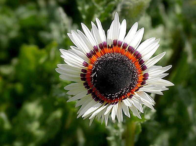Au jardin des plantes. - Page 7 48869352453_f926abec1d_c
