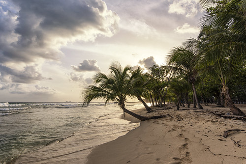 sunset sun sunrays dusk beach sea water palm palmtree tree barbados sand island caribbean sky nature outdoor landscape travel holiday summer warm memories
