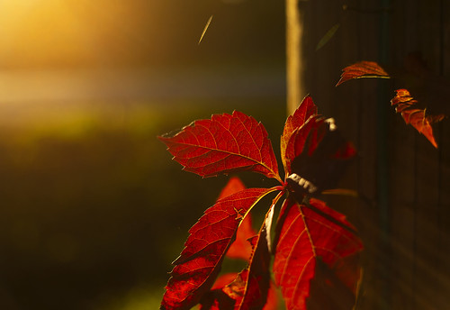 weekday walk hike hiking adventure outdoors fall autumn foliage red beautiful glow bokeh 50mm nature peaceful canon 2019 sunset