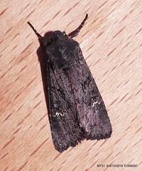 Black Rustic IR  P1540996