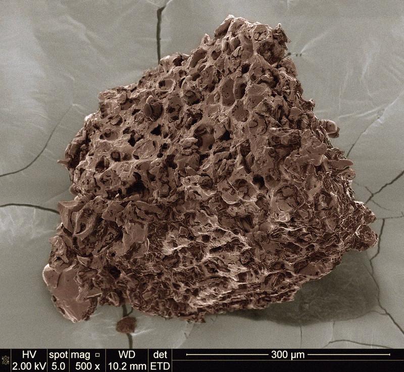 Cấu trúc xốp của hạt cà phê sau khi xay