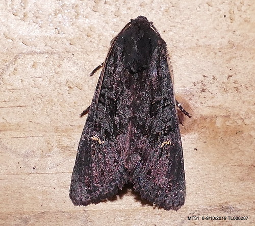 Black Rustic IR P1540984