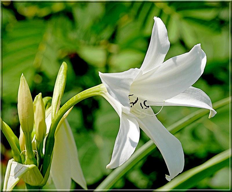 Au jardin des plantes. - Page 7 48870064167_e753e5830f_c