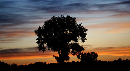 clouds sunrise silhouette tree treesilhouette sky dawn earlymorning cottonwood cottonwoodtree