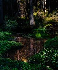 Deep in Trolldalen