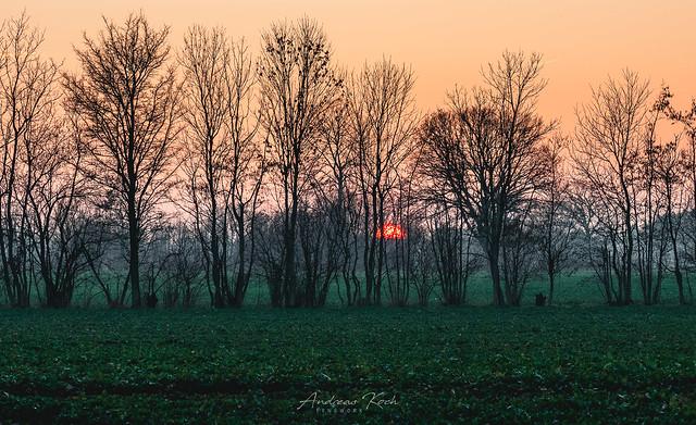 Sundown in the fields