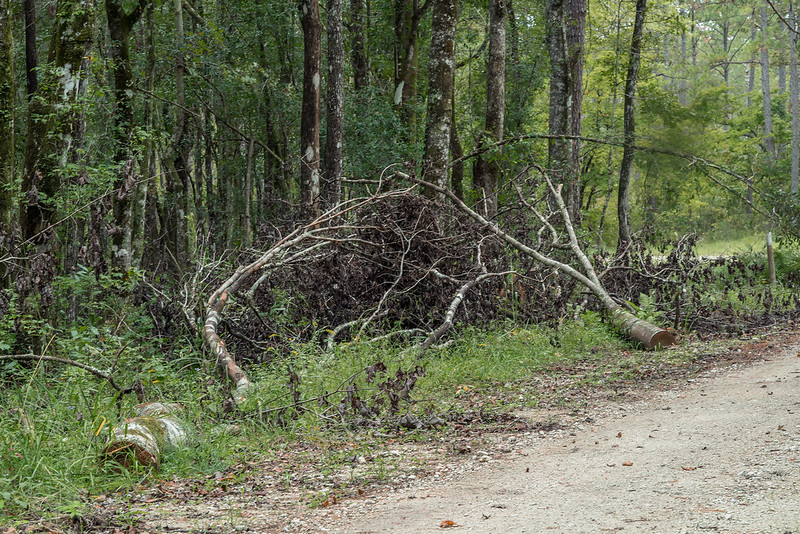 Tree debris covering the orchid habitat