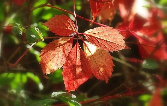 Début d'automne2