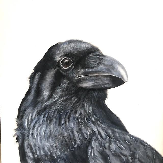 cuervo350x50