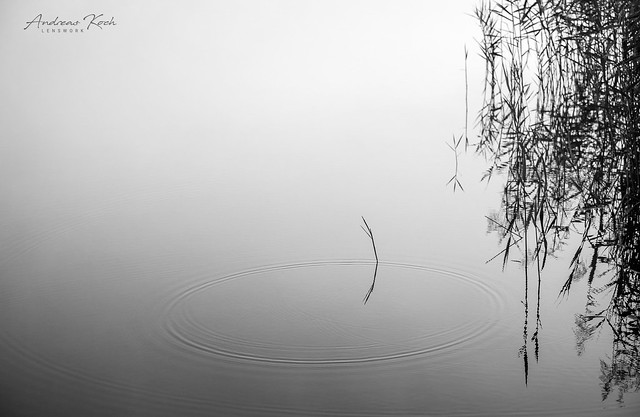 Reflections of silence