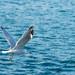 gaviota sobre el mar azul