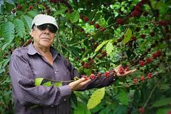 Caficultura en el Ecuador