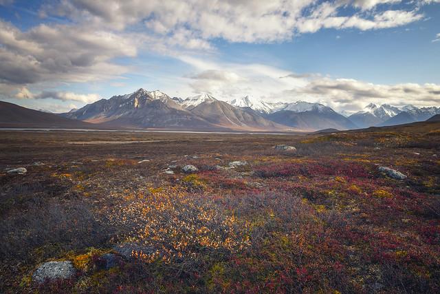 Arctic Autumn - Land of Tundra