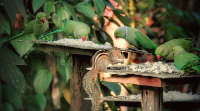 Bird Feeder in Sri Lanka
