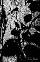 Shadow Noir