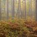 Aulanko autumn