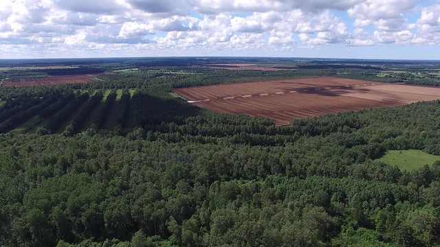 Turbaväli / Peat field in Estonia