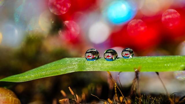 Drops - 7529