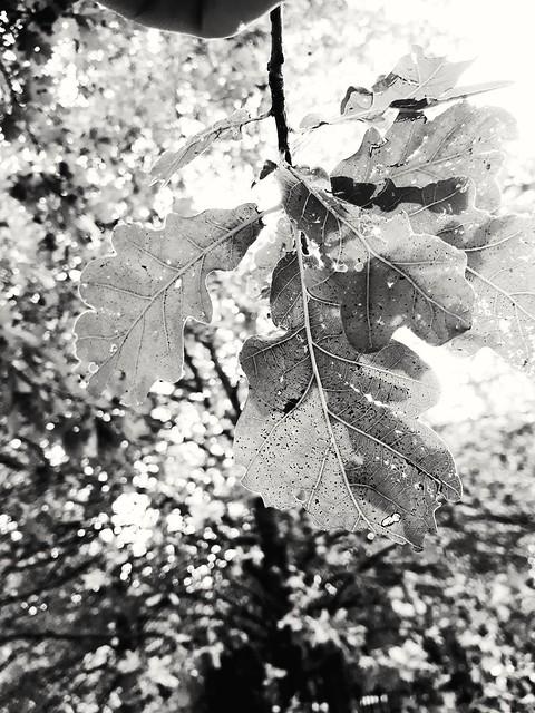 Leaf.  #foglie #natura #alatura #alberi #autunno #foglie #fogliesecche #fogliegialle #colori #green #giallo #naturephotography #summer #photooftheday #colors #italia #bosco #photography #bellezzenaturali #fiori #novembre #statodanimo #flowers #colore #ror
