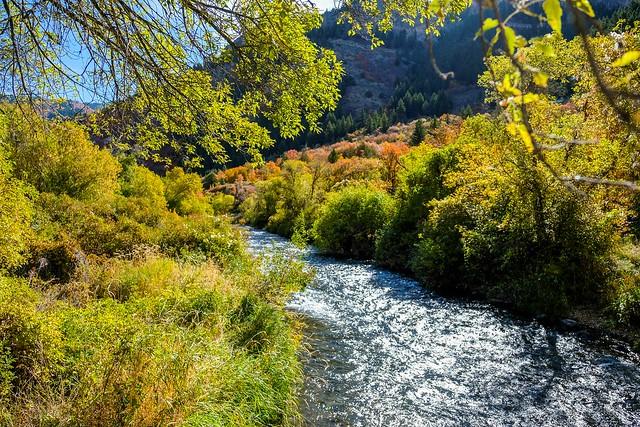 _XH11684_1 Logan Canyon