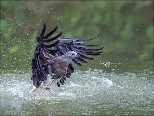 bird170a